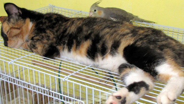 Mogu li mačke i ptice živjeti u istom kućanstvu?