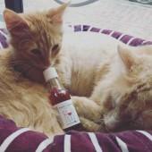 Vino za mačke