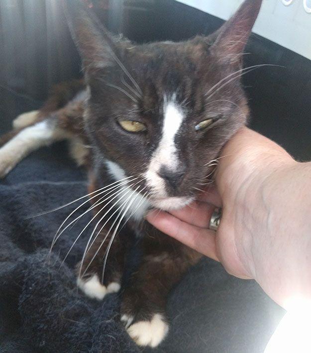Mačka iz Londona pronađena u – Parizu