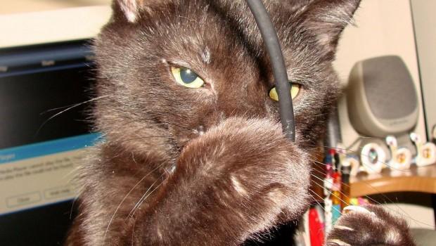 Mačku je ubila znatiželja – ima li istine u ovoj izreci?