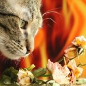 Mačka i miris