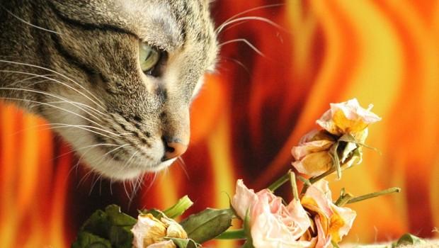 Neka dom lijepo miriše bez da naudite svojoj mački