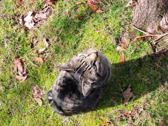 Mačka razmišlja