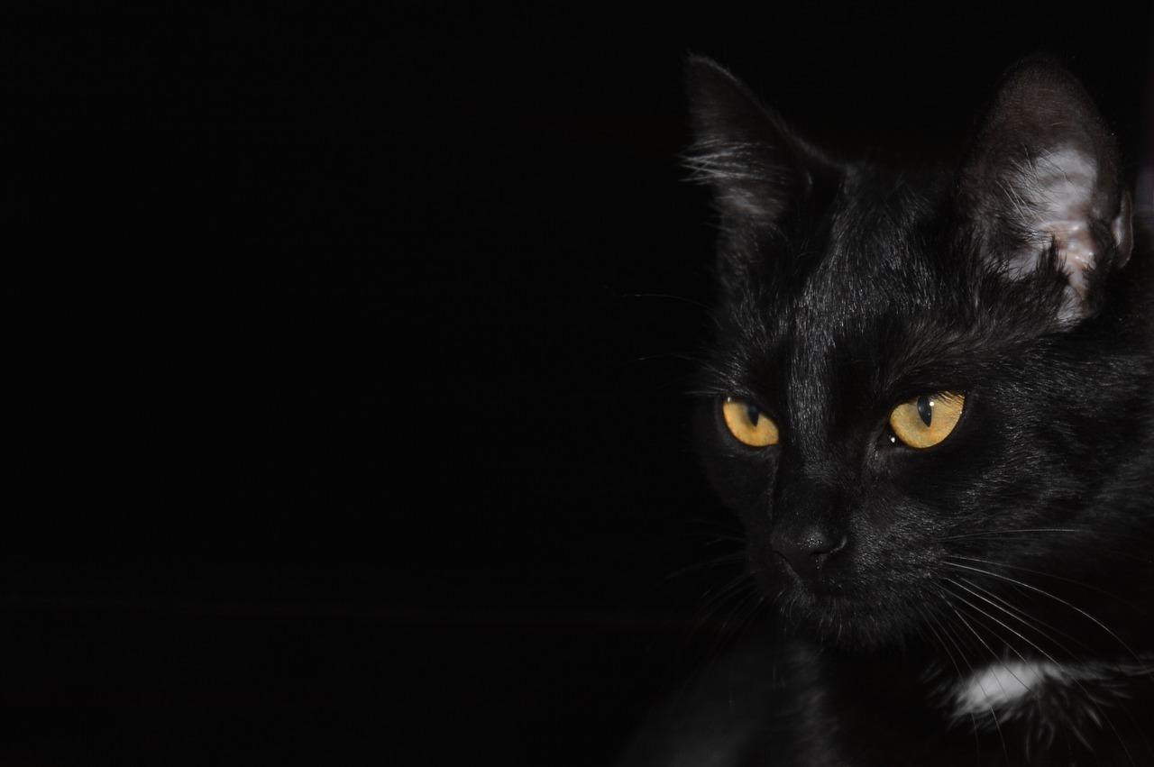 Strah od crne mačke – porijeklo praznovjerja