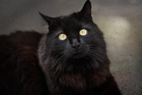 Crna mačka i praznovjerje