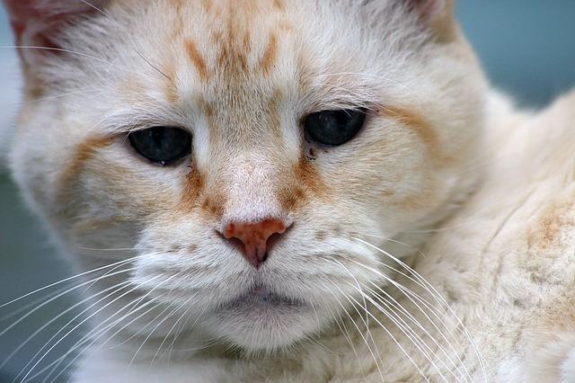 Udomljavanje starijih mačaka