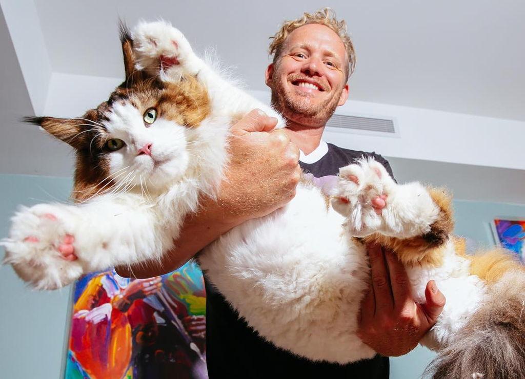 Mačak Samson