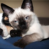 Mačka - idealni ljubimac