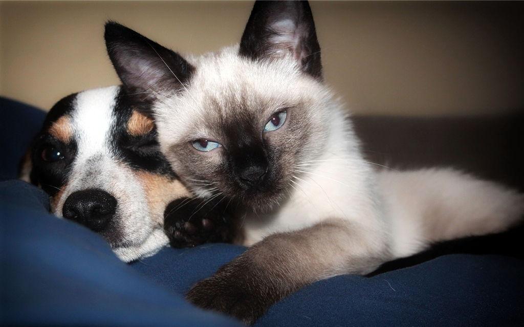 Mačke – najčešći odabir kućnog ljubimca