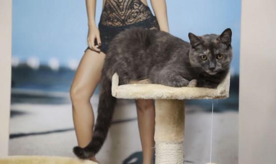 Uredska mačka