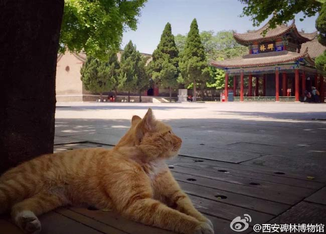 Društvene mreže spasile kineske mačke lutalice