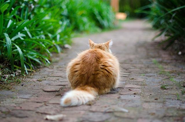 Što se sve o zdravlju može iščitati iz mačjeg repa?