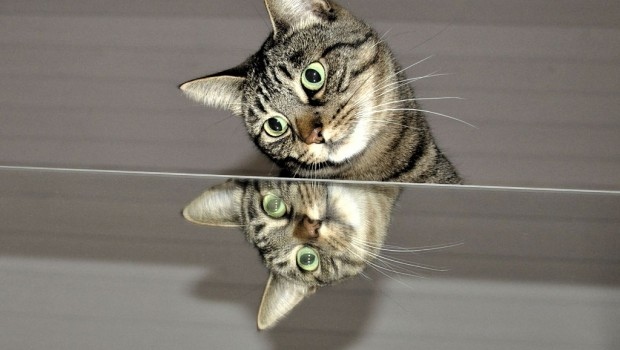 Mačke i odraz u ogledalu