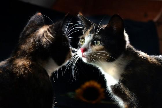 Mačka i ogledalo