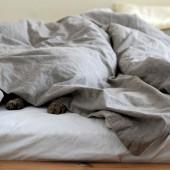 Mačka u krevetu