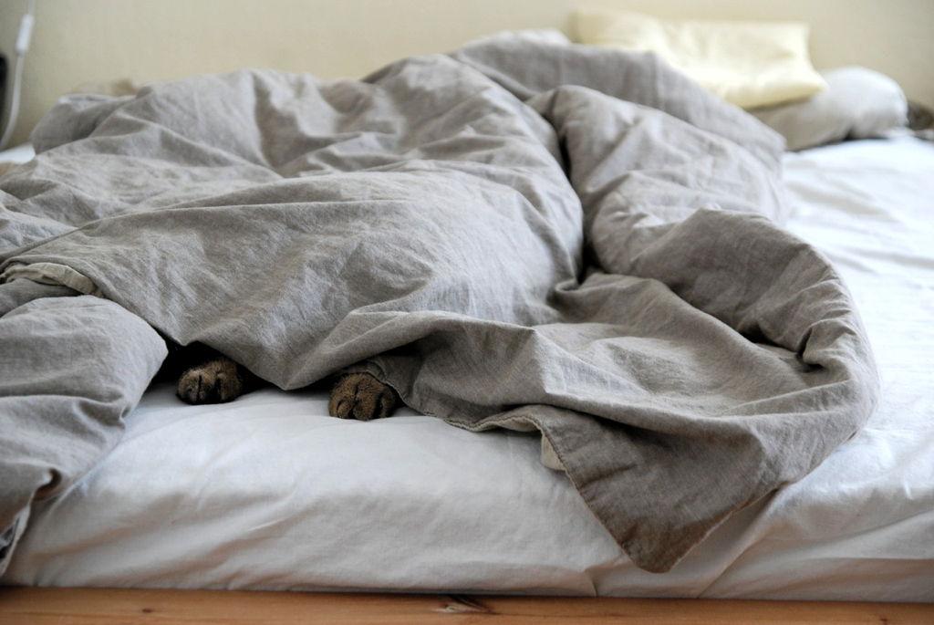 Zašto moja mačka spava sa mnom?