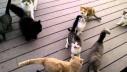 Mačja gomila na farmi