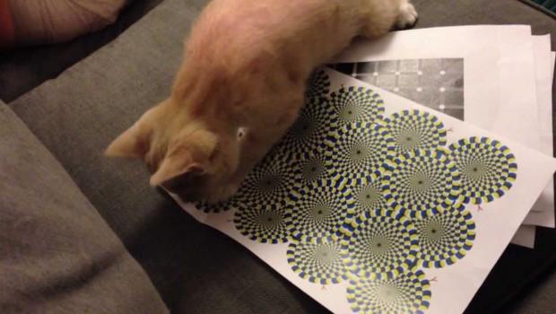 Vide li i mačke optičke iluzije