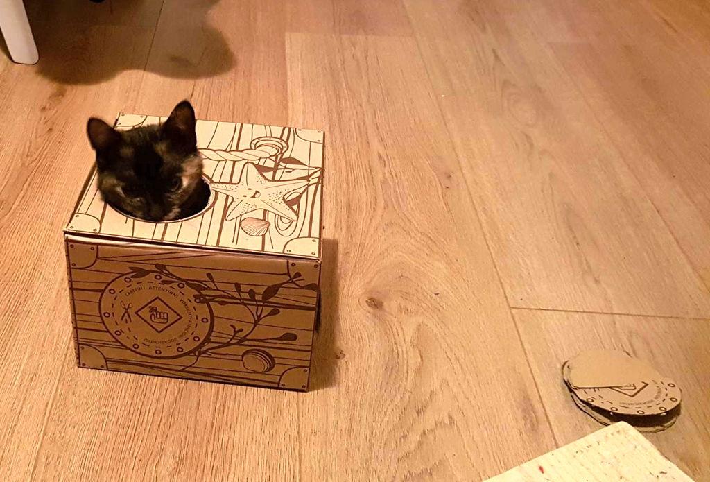 Cait zdjelica za mačke