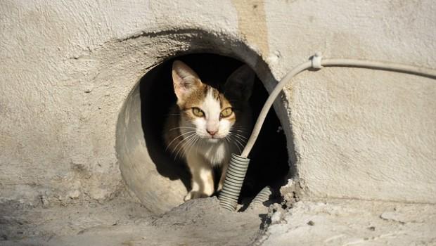 Podržimo peticiju za hranilište i stacionar za bolesne ulične mačke
