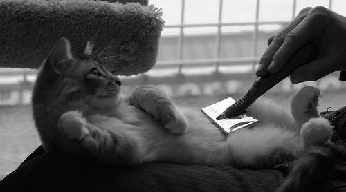 cat comb photo
