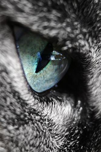 cat eye photo