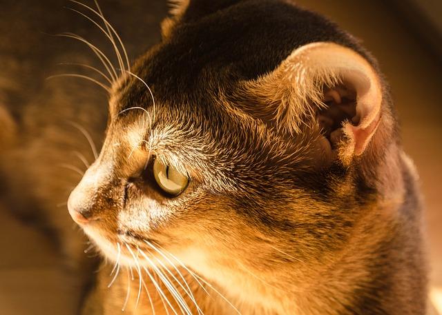 cat ear photo