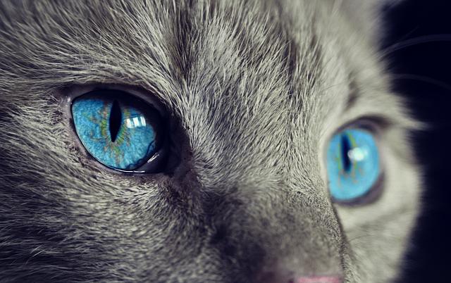 Moć mačjeg vida i sluha