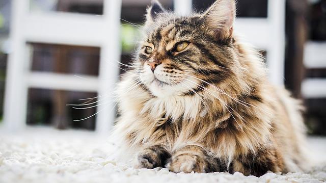 cat coat photo