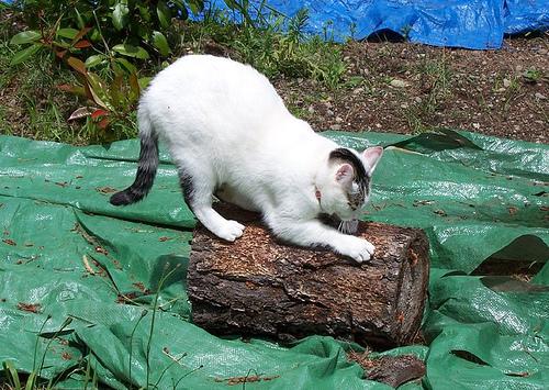 cat scratch photo