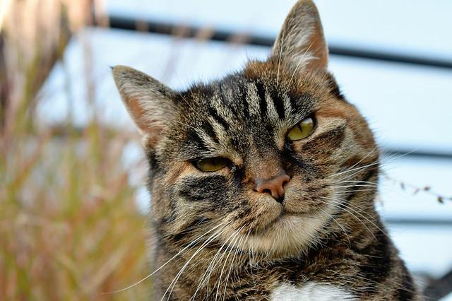 cat closed eyes photo
