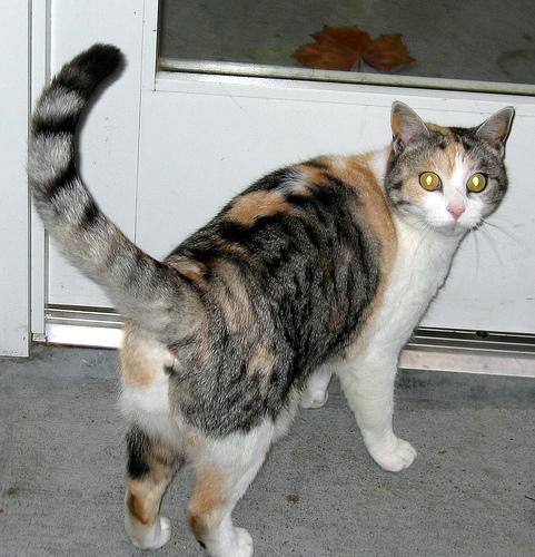 lost cat photo
