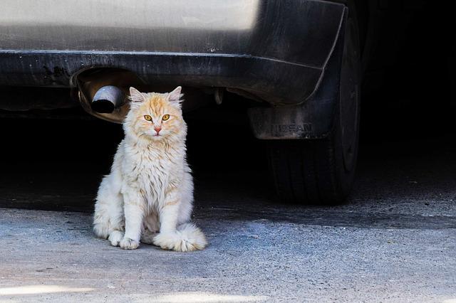 Mačka bježi od kuće
