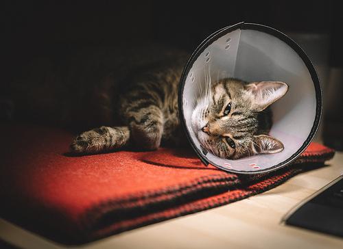 Rana sterilizacija mačaka
