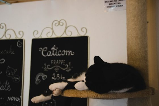 Zagreb Cat Caffe