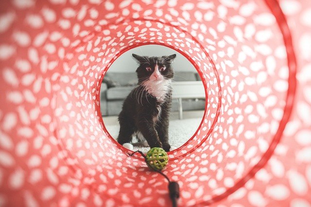 Zašto mačke skrivaju svoje igračke?