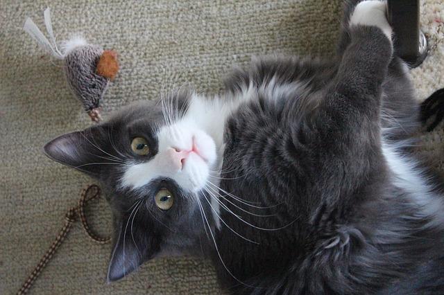 Mačka i igračke