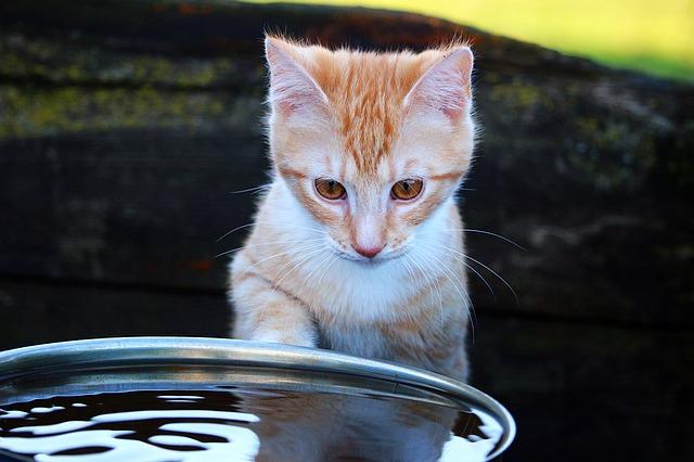 Mačka i voda