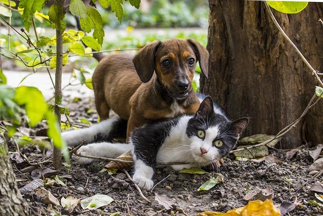 Najbolje pasmine za kućanstva koja imaju mačku